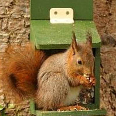 Red Squirrel Feeders