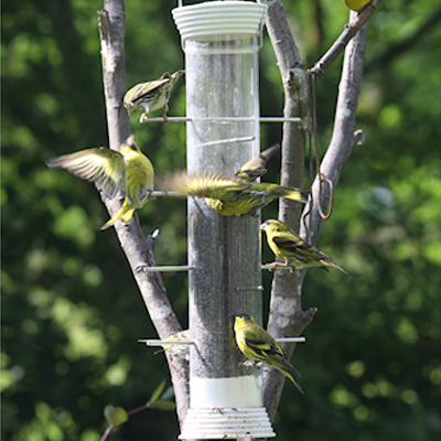 Ultimate Niger Seed Feeder Large