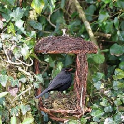 Open nest buddy2